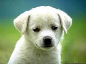 Isn't this puppy cute?