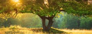 environmental-stewardship bottom